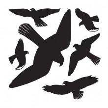 Warnvögel 30x30cm schwarz 1St